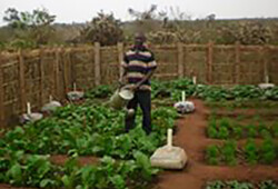 Manna House Garden 2